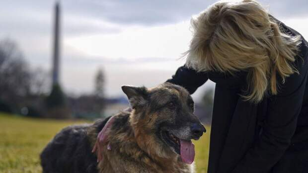 Кинологи назвали способы уберечь собаку от укусов клещей