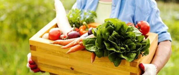 home-grown-vegetables-desktop