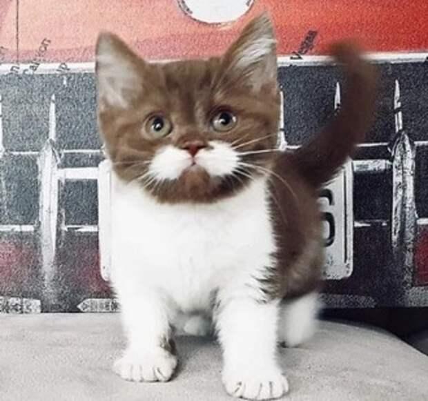 Кот с идеальными «усами» остался без хозяев, но теперь ему прощают любые шалости