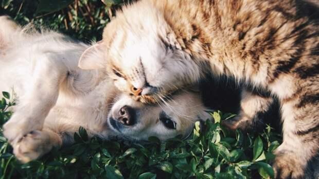 Вирусологи заподозрили собак и кошек в распространении британского штамма коронавируса