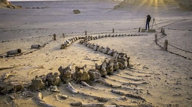 Раскопки в Сахаре
