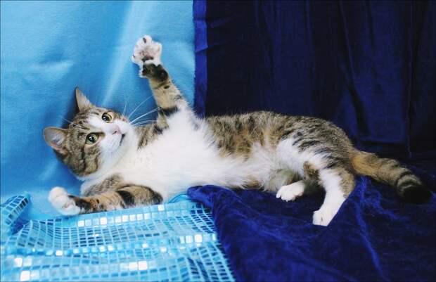 Ищем понимающих людей для потрясающей кошки!!!