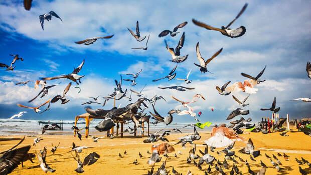 Ученые назвали число птиц на Земле