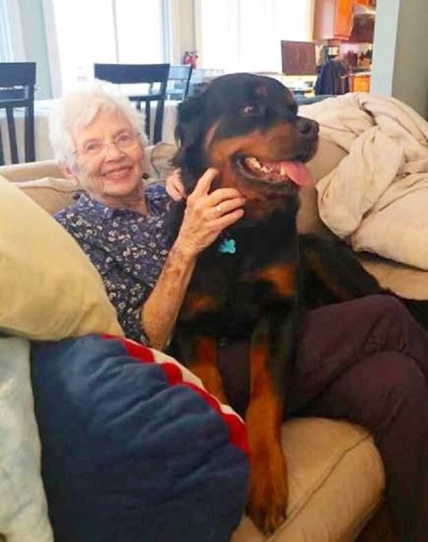Собака и женщина
