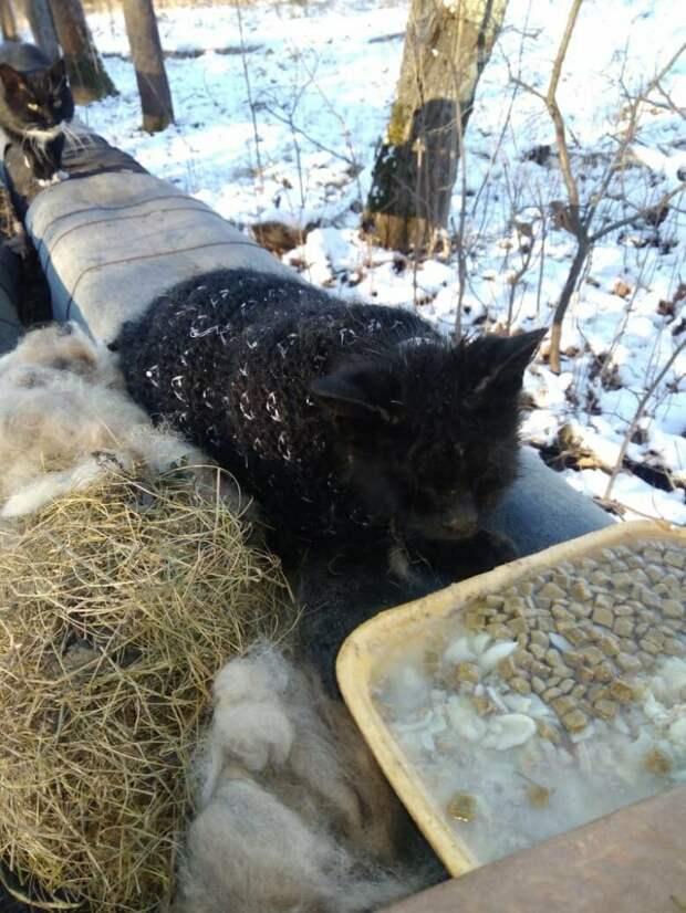 В мороз и дождь котик выживал в одном носке, не веря в свое спасение…