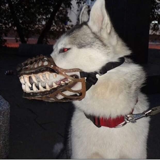 миленькие намордники где купить с зубами