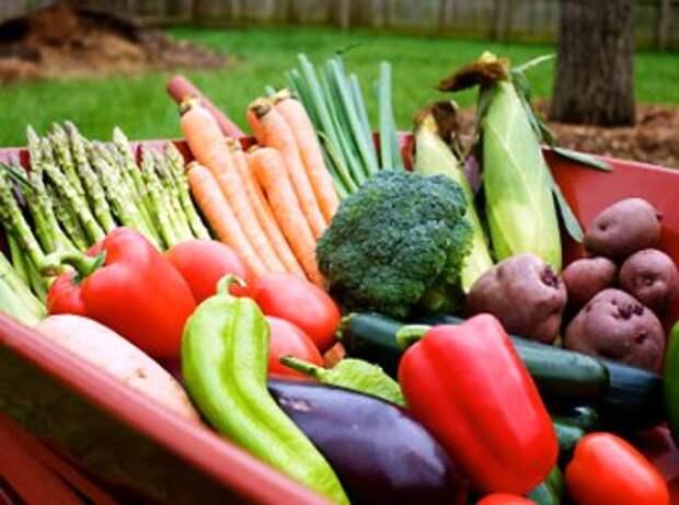 Как удвоить урожай на небольшом участке