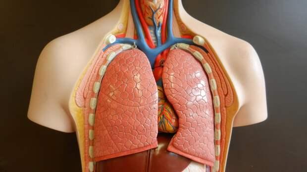 Американские ученые разработали адресное лечение воспаления легких