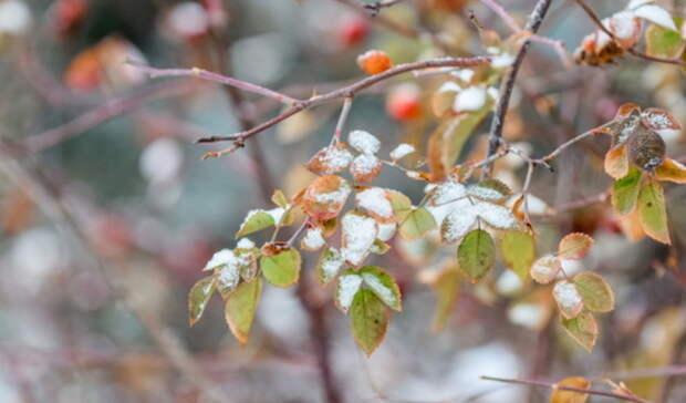 Мокрый снег ожидают в Удмуртии с вечера 19 октября