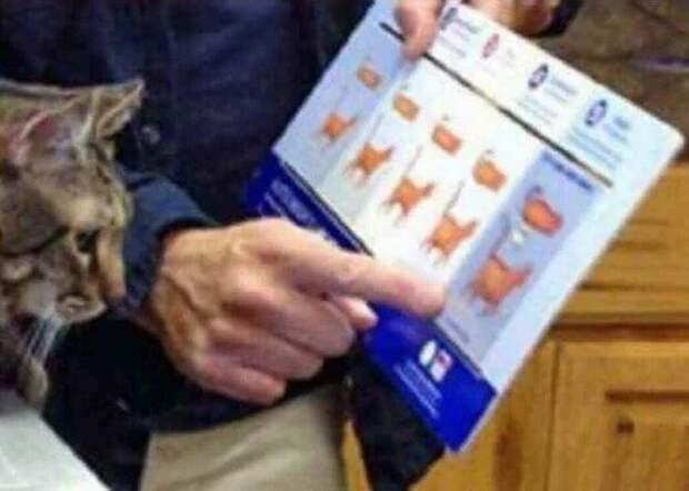 20+ котов-преступников, которых мы уже простили