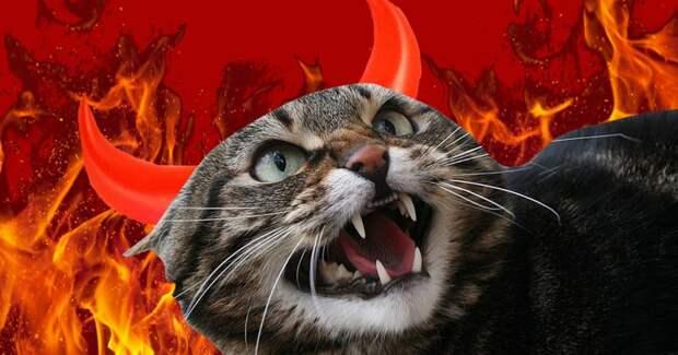 3 факта о том, как из-за кошек и Папы Римского погибло 25 миллионов человек