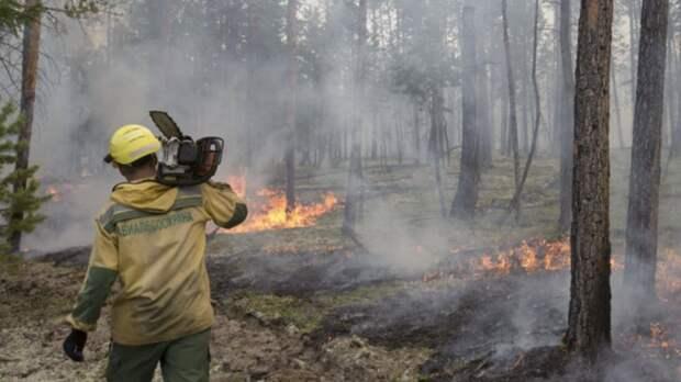 В России за сутки потушили 99 лесных пожаров