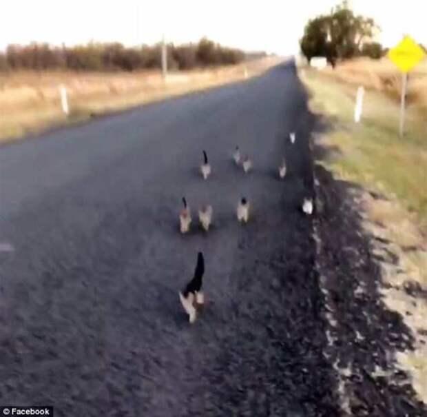 Выгуливая собаку, женщина встретила 10 котят. Они пробежали за ней 1 км до самого дома