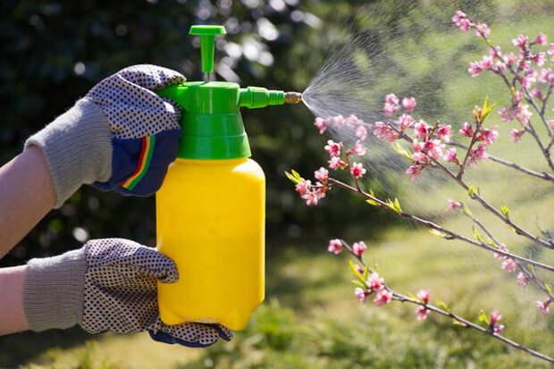Весной необходимо защитить сад от вредителей