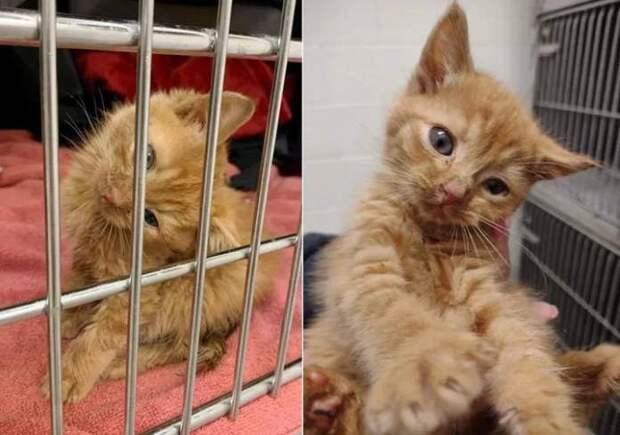Котёнок с кривой шейкой заполучил себе хозяйку мечты