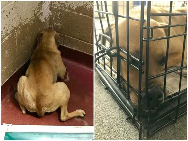 Испуганная собака жалась в угол приютской клетки история, история спасения, помощь животным, собака, собаки, спасение животных
