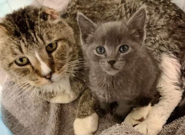Кроха-кошечка потеряла братишку, и ее утешил старенький кот