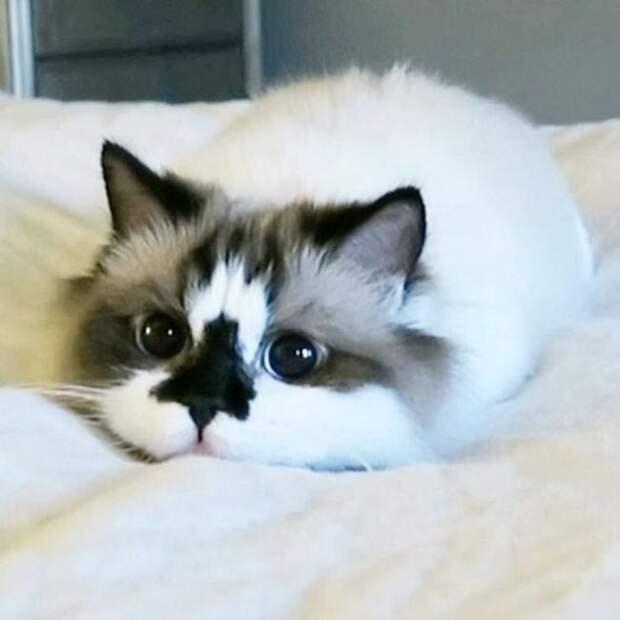 Кот по кличке Альберт - еще одна звезда соцсетей (10 фото)