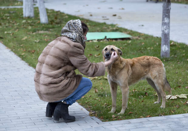 Волгоград оккупировали стаи диких собак
