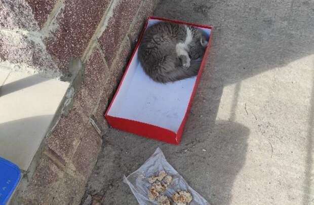 Кошечка нуждалась в помощи, но она скромно ютилась под балконами в коробке