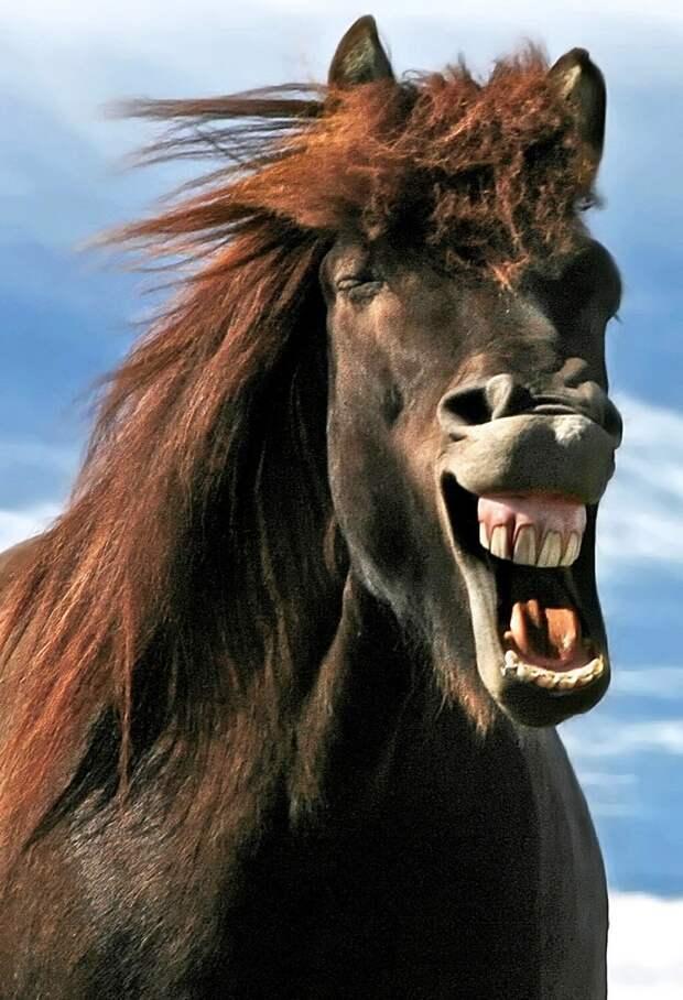 Красота диких лошадей Исландии