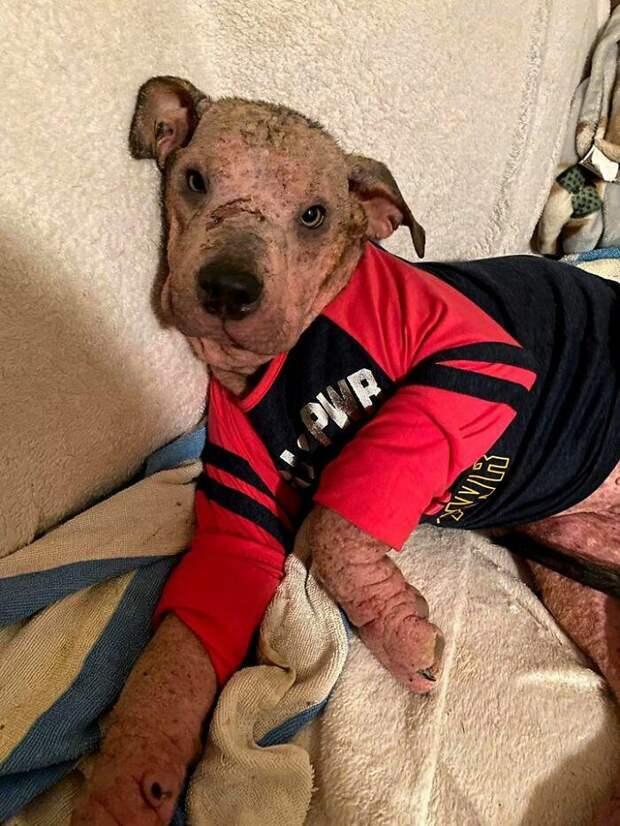 Женщина взяла к себе больную собаку и изменила ее жизнь