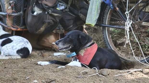Я увидел мужчину с 16 собаками, толкающего телегу и был удивлен, что он делает