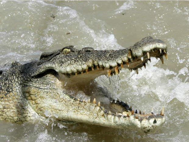 Самые агрессивные животные в мире
