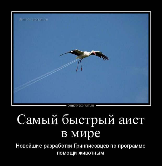 5402287_demotivatorium_ru_samij_bistrij_aist_v_mire_93406 (600x614, 80Kb)
