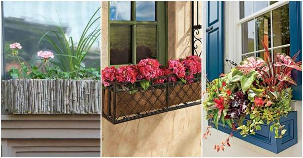 Чудесные цветы за окном: яркие идеи для дачи и не только