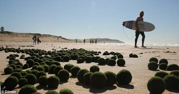 Инопланетные яйца на пляже в Сиднее