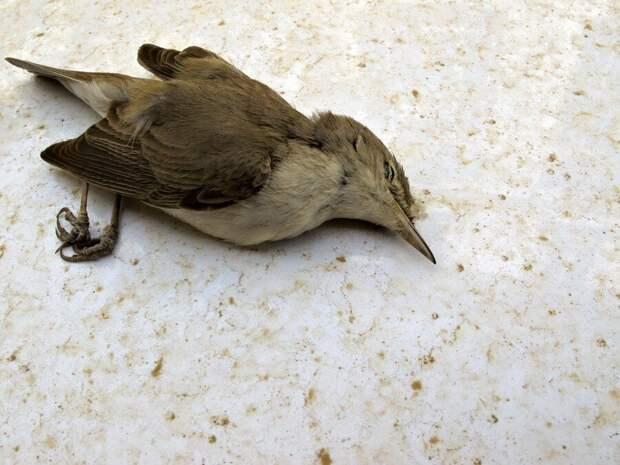 На территории США и Мексики обнаружили сотни тысяч мертвых птиц