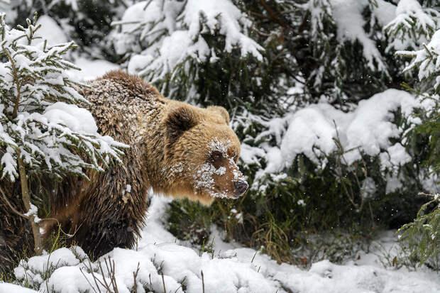 Жительницу Аляски в туалете укусил медведь
