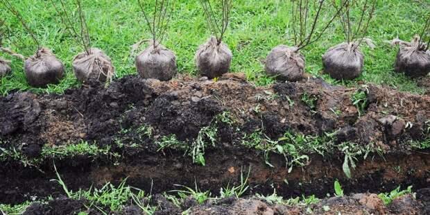 В Алешкинском лесу посадят более ста саженцев по программе «Наше дерево»