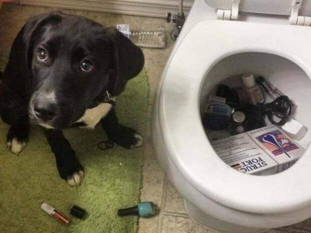 15 примеров того, что делают собаки, когда вас нет дома