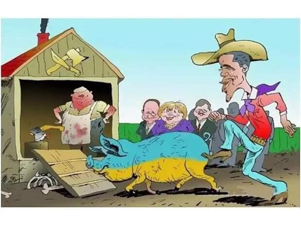 Украина-2021: от жизни собачьей, не стали бы свиноводы кусачими