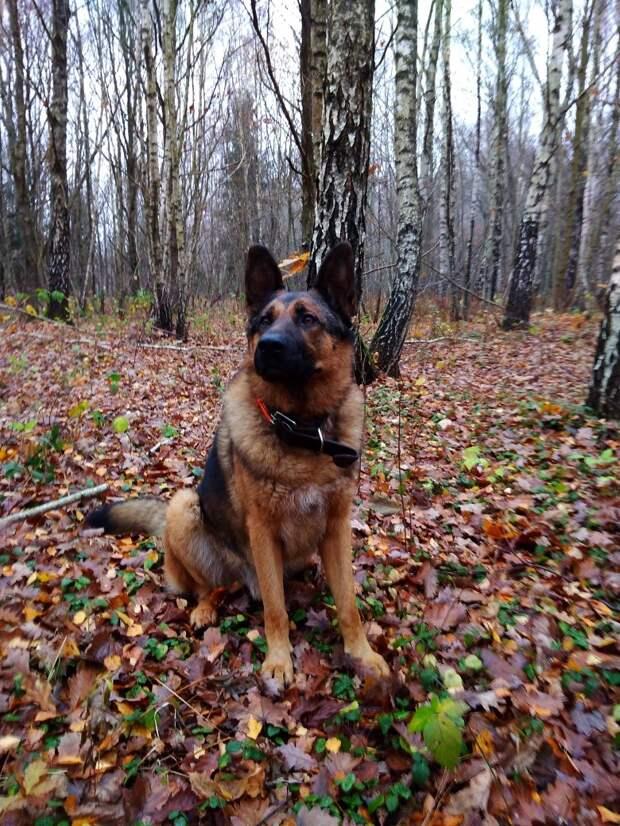 пёс на прогулке