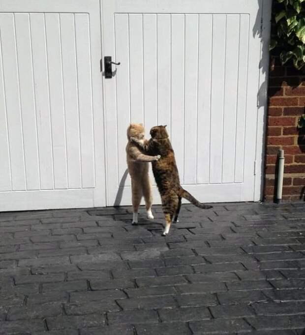 20 котов, у которых была всего секунда, чтобы прославиться. И они воспользовались ею сполна!