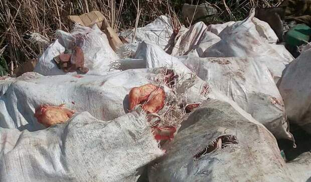 ВОмске кости животных выбросили гнить наулице