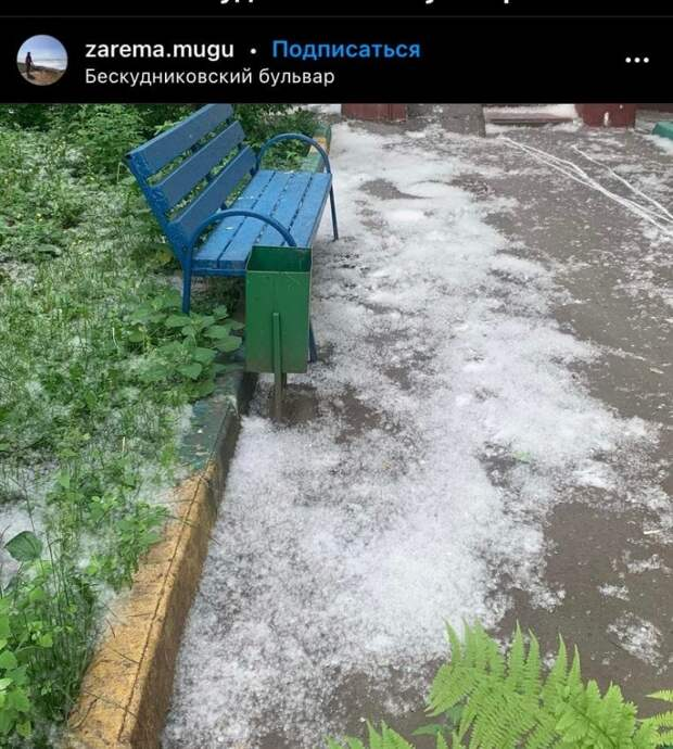 Фото дня: тополиный «снег» на Бескудниковском