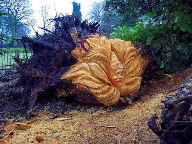 Tommy Craggs – скульптуры на пнях