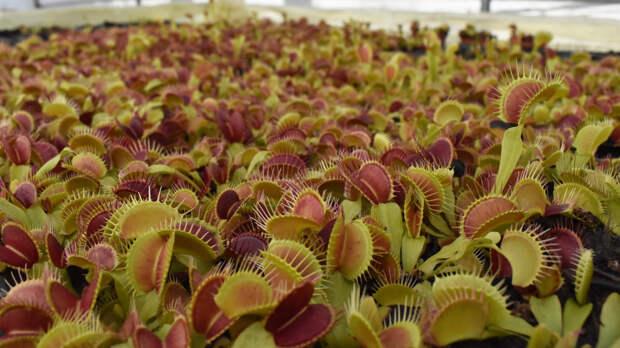 Сингапурские ученые смогли управлять хищным растением через смартфон