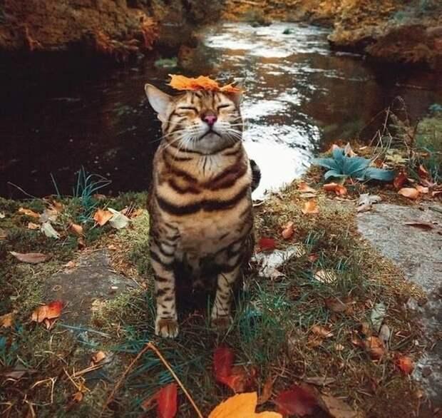 Так и буддиста, познавшего дзен гифки, коты, фото