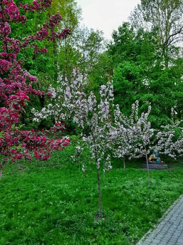 За что я люблю весну