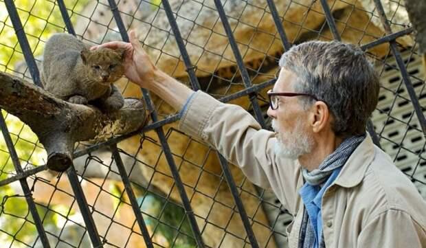 Ягуарунди. Кошка, которая дружит с обезьянами, ест фрукты и чирикает