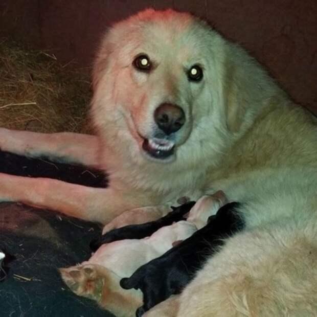 Быть мамой — это призвание! Собака, потерявшая щенят при пожаре, приняла малышей-сироток