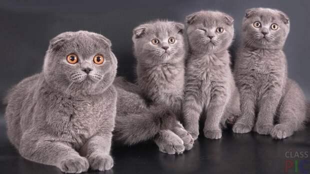 Всемирный день кота. «Кота заводят, чтобы...»