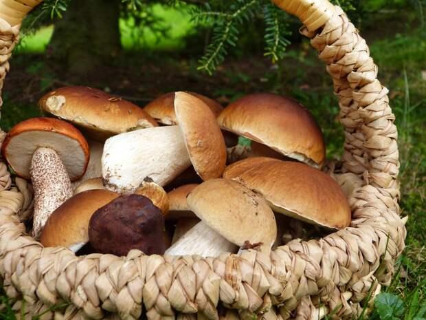Лесные грибы и шампиньоны: почему современные люди едят их неправильно