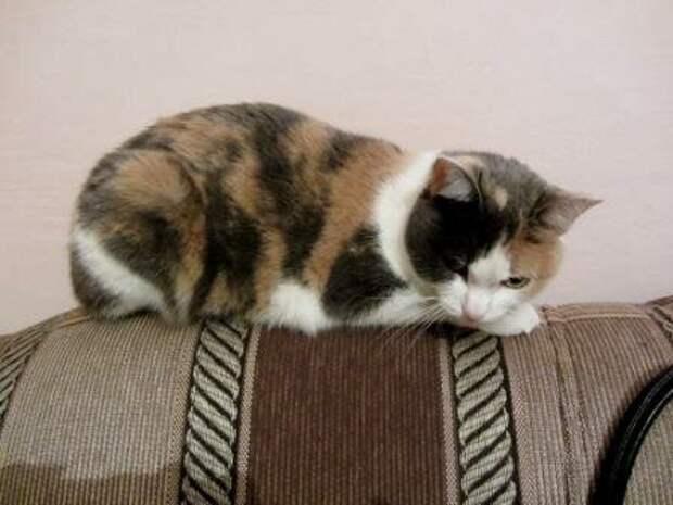 Кошки появляются в нашей жизни по разному. Люся появилась после звука автосигнализации