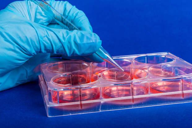 В Свердловской области появились новые штаммы коронавируса